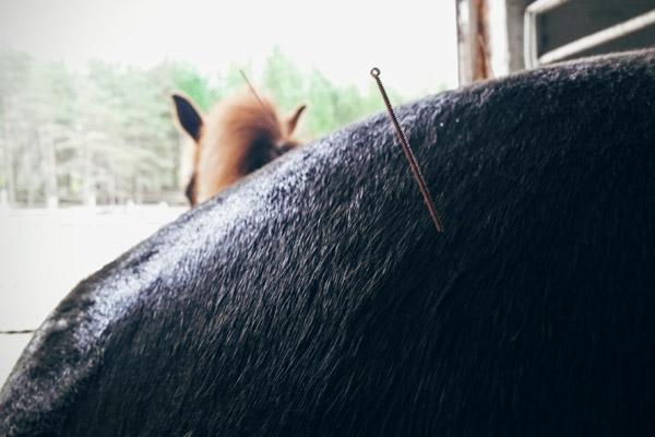 Lihashuoltopalvelut hevosille ja koirille