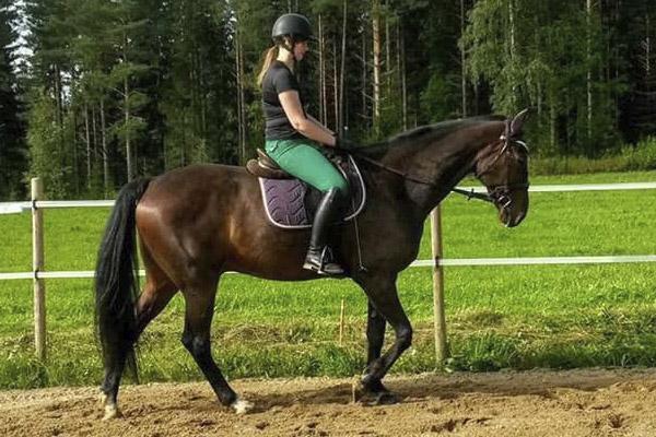 Ratsastus ja hevostoiminta